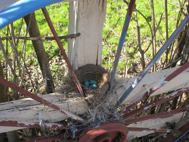 What a text-book-looking nest!